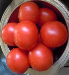 [washed tomatoes]